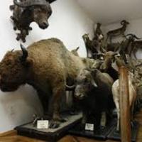 Зоологічний музей ім. Бенедикта Дибовського  фото #2