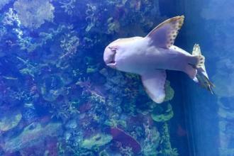 Поцілунок з акулою